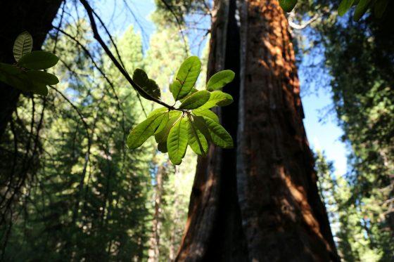 セコイア国立公園 2012 day4