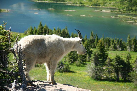 アメリカ北部 国立公園の旅 2005